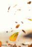 Decoline-Leaves.jpg